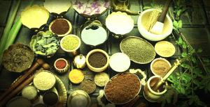 herbs collection-studio